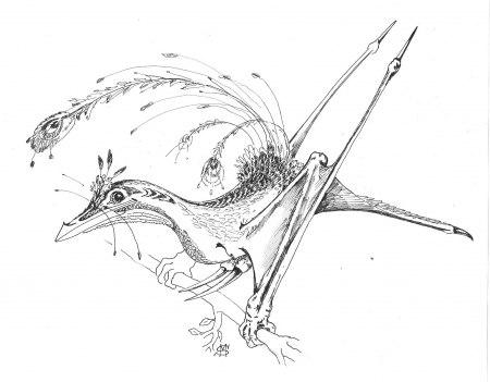 птичка с ножками-иголками из леса на Территориях